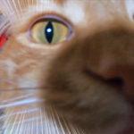 GoPro撮影どアップ猫様