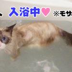 乱歩の入浴シーン