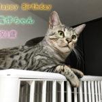 露伴ちゃん祝1歳の誕生日